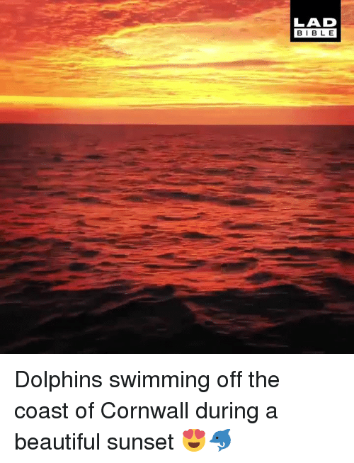Beautiful, Dank, and Bible: LAD  BIBLE Dolphins swimming off the coast of Cornwall during a beautiful sunset 😍🐬