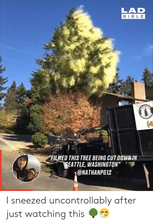 "Dank, Bible, and Seattle: LAD  BIBLE  ""FILMED THIS TREE BEING CUT DOWN-IN  SEATTLE, WASHINGTON""  @NATHANPG12  SAD I sneezed uncontrollably after just watching this 🌳🤧"