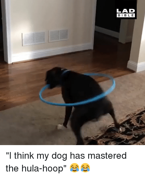 "Dank, Bible, and 🤖: LAD  BIBLE ""I think my dog has mastered the hula-hoop"" 😂😂"