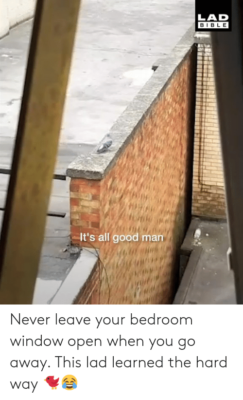 Dank, Bible, and Good: LAD  BIBLE  It's all good man Never leave your bedroom window open when you go away. This lad learned the hard way 🐦😂