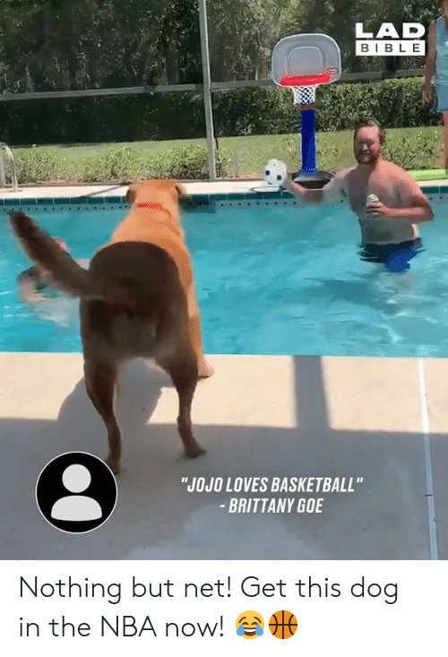 "Basketball, Dank, and Nba: LAD  BIBLE  ""JOJO LOVES BASKETBALL""  BRITTANY GOE Nothing but net! Get this dog in the NBA now! 😂🏀"