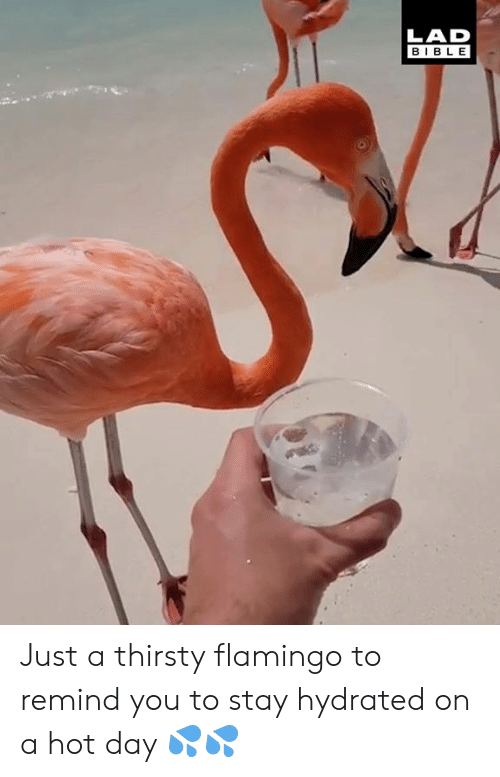 Dank, Thirsty, and Bible: LAD  BIBLE Just a thirsty flamingo to remind you to stay hydrated on a hot day 💦💦