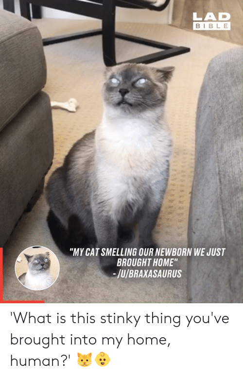 """newborn: LAD  BIBLE  """"MY CAT SMELLING OUR NEWBORN WE JUST  BROUGHT HOME""""  -/u/BRAXASAURUS 'What is this stinky thing you've brought into my home, human?' 🐱👶"""
