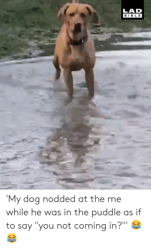 """Dank, Bible, and 🤖: LAD  BIBLE 'My dog nodded at the me while he was in the puddle as if to say """"you not coming in?""""' 😂😂"""
