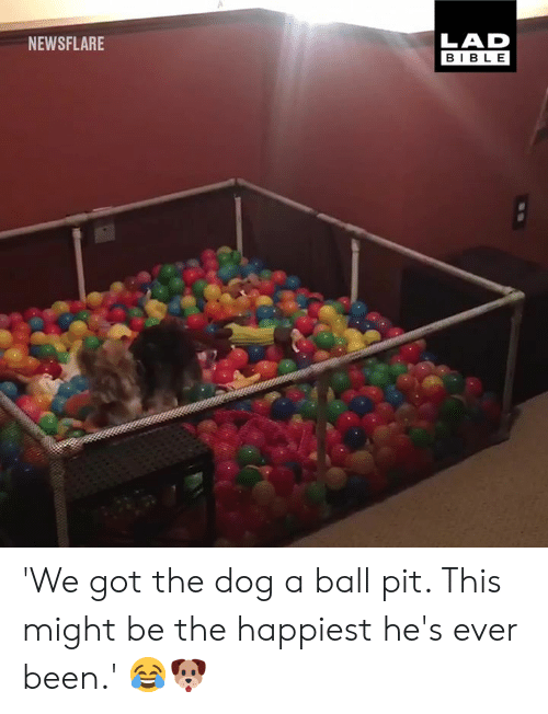 Dank, Bible, and Been: LAD  BIBLE  NEWSFLARE 'We got the dog a ball pit. This might be the happiest he's ever been.' 😂🐶