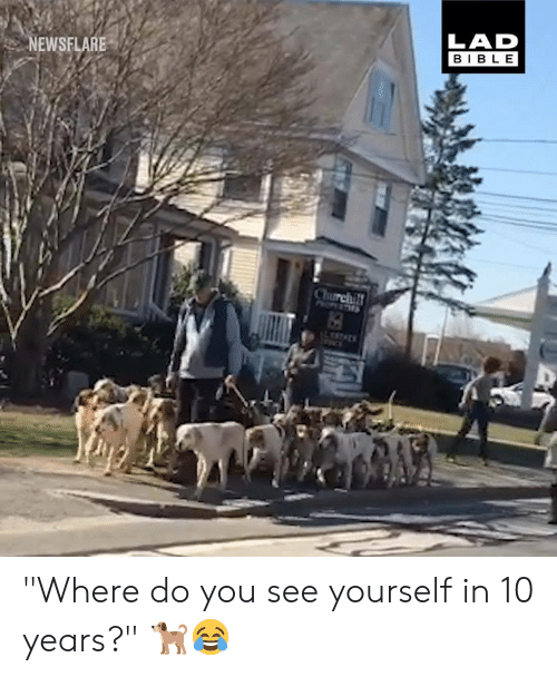 """Dank, Bible, and 🤖: LAD  BIBLE  NEWSFLARE """"Where do you see yourself in 10 years?"""" 🐕😂"""