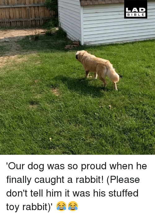 Memes, Bible, and Rabbit: LAD  BIBLE 'Our dog was so proud when he finally caught a rabbit! (Please don't tell him it was his stuffed toy rabbit)' 😂😂