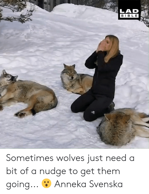 Nudge: LAD  BIBLE Sometimes wolves just need a bit of a nudge to get them going... 😮  Anneka Svenska
