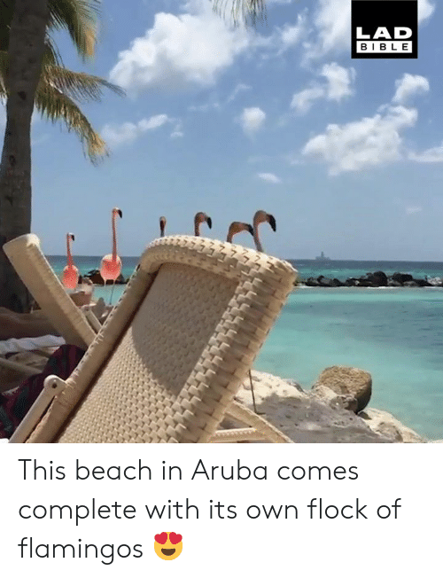 Dank, Beach, and Bible: LAD  BIBLE This beach in Aruba comes complete with its own flock of flamingos 😍