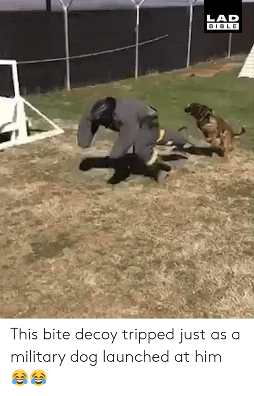 Dank, Bible, and Military: LAD  BIBLE This bite decoy tripped just as a military dog launched at him 😂😂