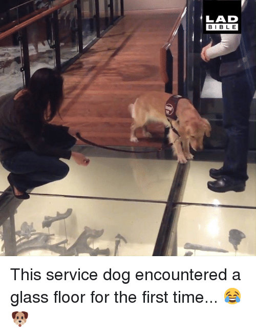 Dank, Bible, and Time: LAD  BIBLE This service dog encountered a glass floor for the first time... 😂🐶