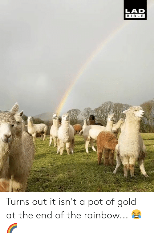 Dank, Bible, and Rainbow: LAD  BIBLE Turns out it isn't a pot of gold at the end of the rainbow... 😂🌈