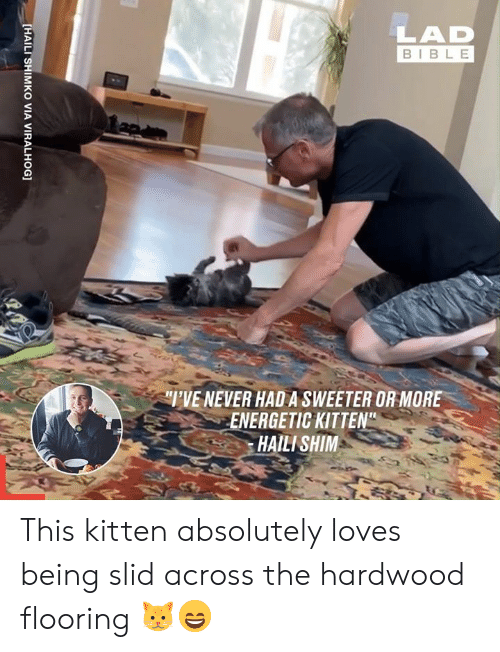 "Dank, Bible, and Never: LAD  BIBLE  TVE NEVER HADA SWEETER OR MORE  ENERGETIC KITTEN""  HAILI SHIM  [HAILI SHIMKO VIA VIRALHOG] This kitten absolutely loves being slid across the hardwood flooring 🐱😄"
