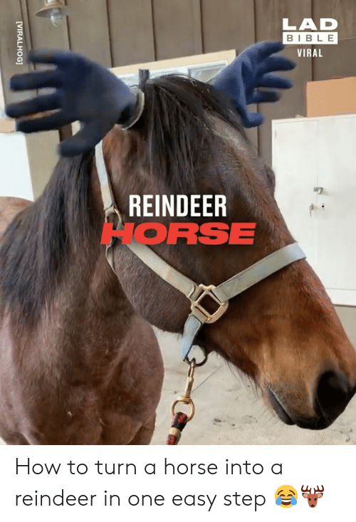 reindeer: LAD  BIBLE  VIRAL  REINDEER  HORSE  [VIRALHOG] How to turn a horse into a reindeer in one easy step 😂🦌