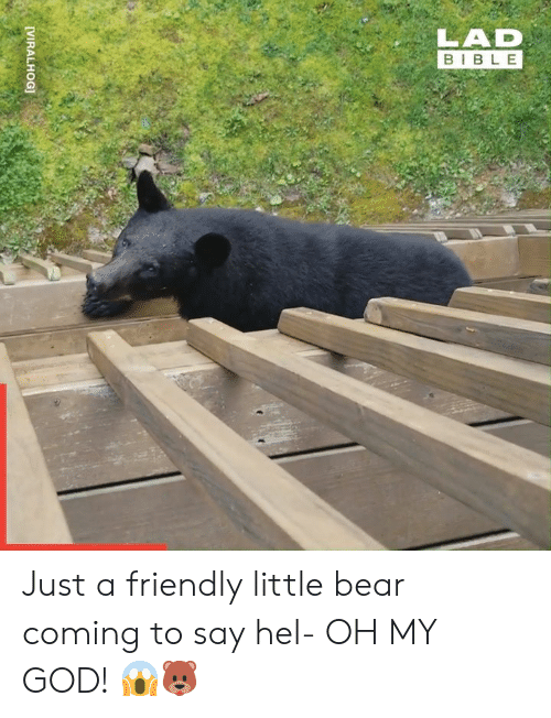 hel: LAD  BIBLE  [VIRALHOG] Just a friendly little bear coming to say hel- OH MY GOD! 😱🐻