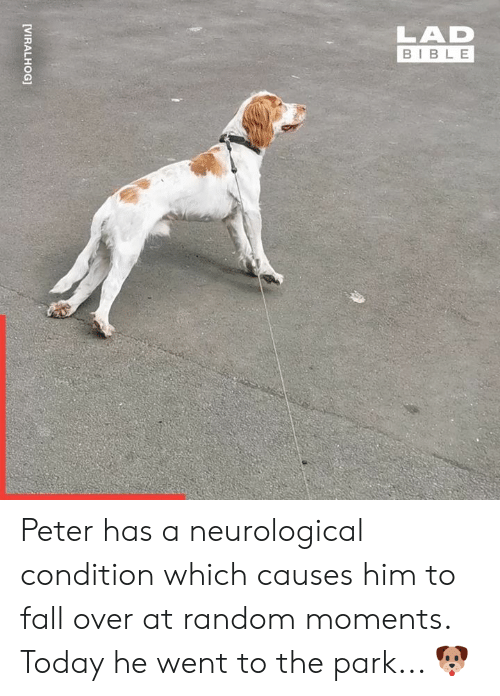 fall over: LAD  BIBLE  [VIRALHOG] Peter has a neurological condition which causes him to fall over at random moments. Today he went to the park... 🐶