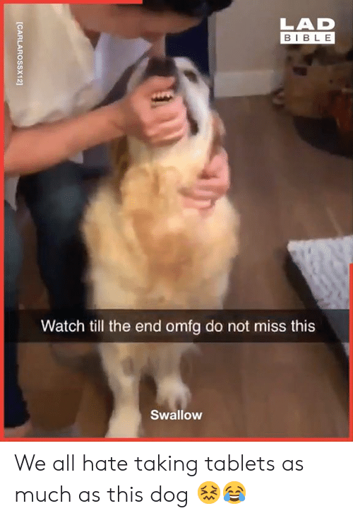 omfg: LAD  BIBLE  Watch till the end omfg do not miss this  Swallow  [CARLAROSSX12] We all hate taking tablets as much as this dog 😖😂