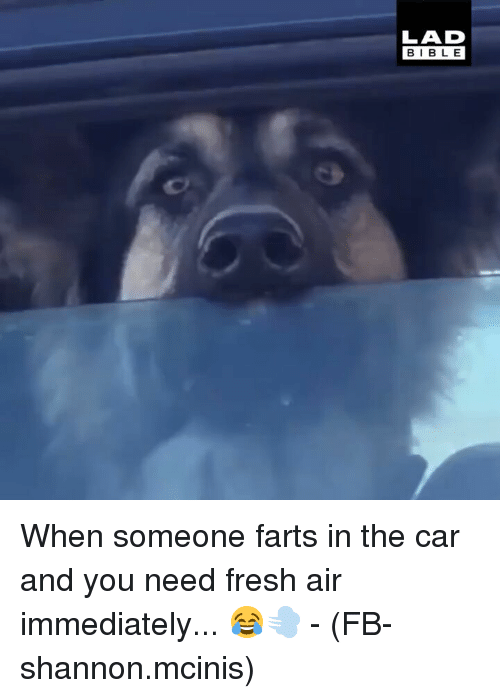 Fresh, Memes, and Bible: LAD  BIBLE When someone farts in the car and you need fresh air immediately... 😂💨 - (FB-shannon.mcinis)