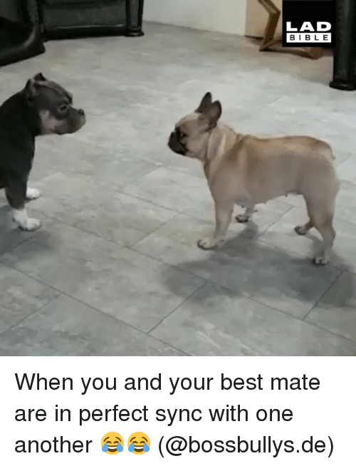 Memes, Best, and Bible: LAD  BIBLE When you and your best mate are in perfect sync with one another 😂😂 (@bossbullys.de)