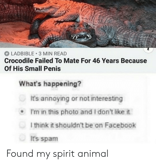 Facebook, Animal, and Penis: LADBIBLE 3 MIN READ  Crocodile Failed To Mate For 46 Years Because  Of His Small Penis  What's happening?  It's annoying or not interesting  P'm in this photo and I don't like it  1think it shouldn't be on Facebook  It's spam Found my spirit animal