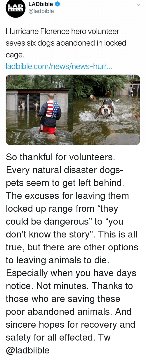 "Animals, Dogs, and Memes: LADbible  LAD  BIBLE@ladbible  Hurricane Florence hero volunteer  saves six dogs abandoned in locked  cage  adbible.com/news/news-nurr... So thankful for volunteers. Every natural disaster dogs-pets seem to get left behind. The excuses for leaving them locked up range from ""they could be dangerous"" to ""you don't know the story"". This is all true, but there are other options to leaving animals to die. Especially when you have days notice. Not minutes. Thanks to those who are saving these poor abandoned animals. And sincere hopes for recovery and safety for all effected. Tw @ladbiible"