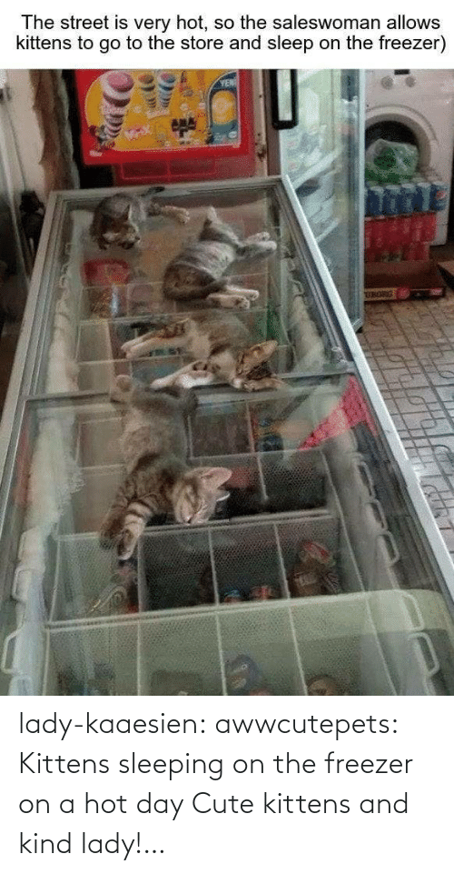 lady: lady-kaaesien: awwcutepets: Kittens sleeping on the freezer on a hot day Cute kittens and kind lady!…