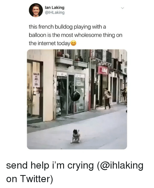 Bulldog: lan Laking  @lHLaking  this french bulldog playing with a  balloon is the most wholesome thing on  the internet today  SALD  40  во send help i'm crying (@ihlaking on Twitter)