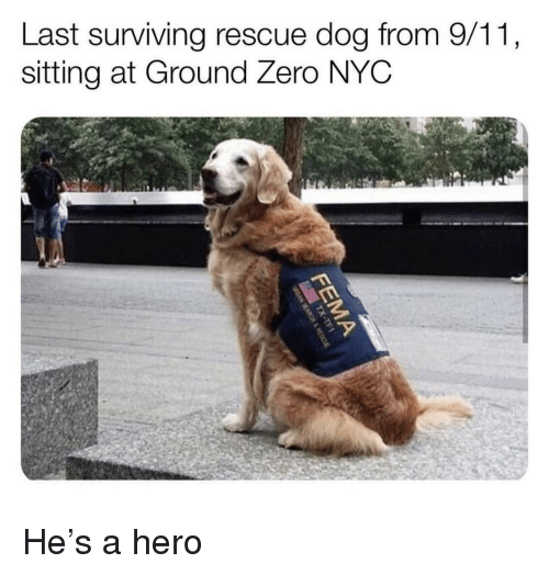 9/11, Zero, and Hero: Last surviving rescue dog from 9/11,  sitting at Ground Zero NYC He's a hero