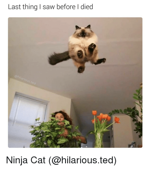 L Dies: Last thing saw before l died Ninja Cat (@hilarious.ted)