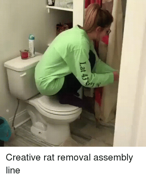 Creativer: Lat 43 Creative rat removal assembly line