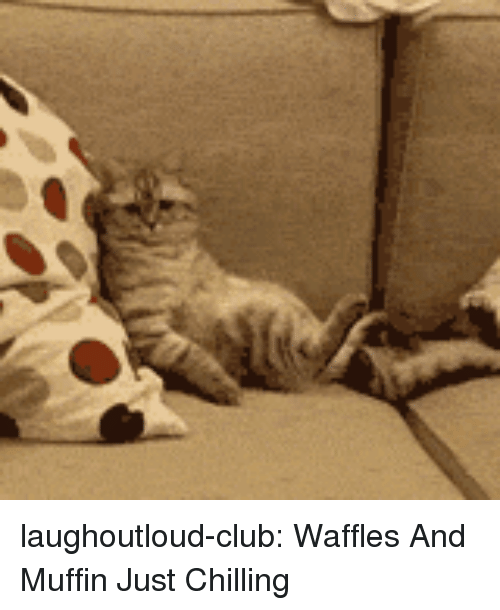 Club, Tumblr, and Blog: laughoutloud-club:  Waffles And Muffin Just Chilling