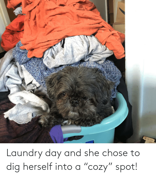 """Laundry: Laundry day and she chose to dig herself into a """"cozy"""" spot!"""