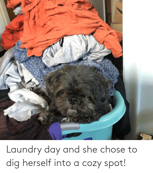 Laundry: Laundry day and she chose to dig herself into a cozy spot!