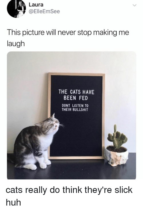 Cats, Huh, and Slick: Laura  @ElleEmSee  This picture will never stop making me  laugh  THE CATS HAVE  BEEN FED  DONT LISTEN TO  THEIR BULLSHIT cats really do think they're slick huh