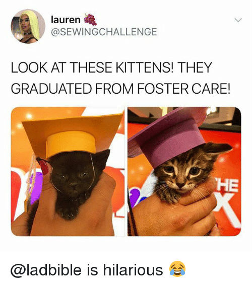 Funny, Kittens, and Hilarious: lauren  @SEWINGCHALLENGE  LOOK AT THESE KITTENS! THEY  GRADUATED FROM FOSTER CARE  HE @ladbible is hilarious 😂