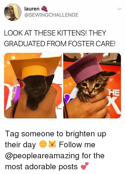 Memes, Kittens, and Tag Someone: lauren  @SEWINGCHALLENGE  LOOK AT THESE KITTENS! THEY  GRADUATED FROM FOSTER CARE!  HE Tag someone to brighten up their day 🌞🐱 Follow me @peopleareamazing for the most adorable posts 💕
