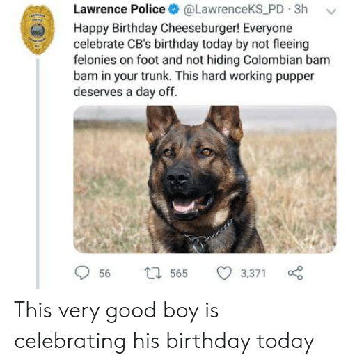 Birthday, Police, and Cbs: Lawrence Police @LawrenceKS PD 3h v  Happy Birthday Cheeseburger! Everyone  celebrate CB's birthday today by not fleeing  felonies on foot and not hiding Colombian bam  bam in your trunk. This hard working pupper  deserves a day off  56  565 3,371 This very good boy is celebrating his birthday today