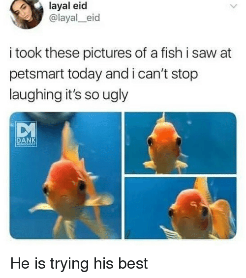 Memes, Saw, and Ugly: layal eid  @layal_eid  i took these pictures of a fish i saw at  petsmart today and i can't stop  laughing it's so ugly  DM  DA He is trying his best