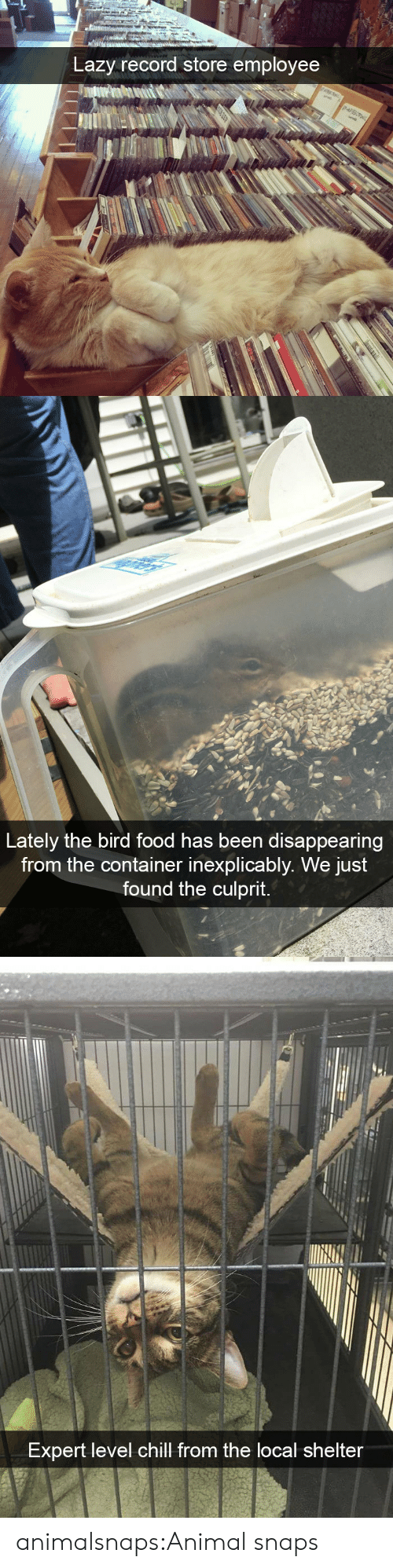 Chill, Food, and Lazy: Lazy record store employee   Lately the bird food has been disappearing  from the container inexplicably. We just  found the culprit.   Expert level chill from the local shelter animalsnaps:Animal snaps