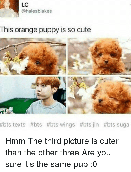bts jin: LC  @halesblakes  This orange puppy is so cute  #bts texts #bts #bts wings #bts jin #bts suga Hmm The third picture is cuter than the other three Are you sure it's the same pup :0