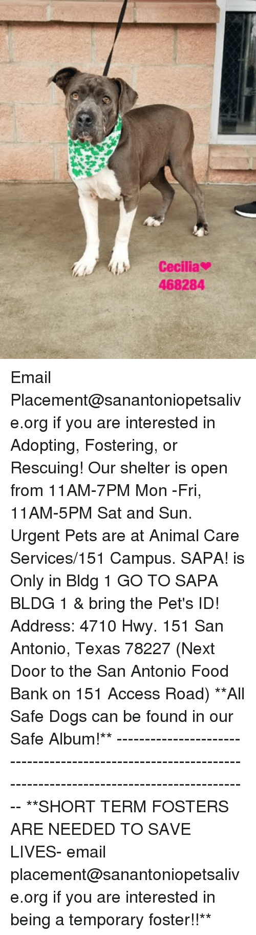 Dogs, Food, and Memes: LCecilia  468284 Email Placement@sanantoniopetsalive.org if you are interested in Adopting, Fostering, or Rescuing!  Our shelter is open from 11AM-7PM Mon -Fri, 11AM-5PM Sat and Sun.  Urgent Pets are at Animal Care Services/151 Campus. SAPA! is Only in Bldg 1 GO TO SAPA BLDG 1 & bring the Pet's ID! Address: 4710 Hwy. 151 San Antonio, Texas 78227 (Next Door to the San Antonio Food Bank on 151 Access Road)  **All Safe Dogs can be found in our Safe Album!** ---------------------------------------------------------------------------------------------------------- **SHORT TERM FOSTERS ARE NEEDED TO SAVE LIVES- email placement@sanantoniopetsalive.org if you are interested in being a temporary foster!!**