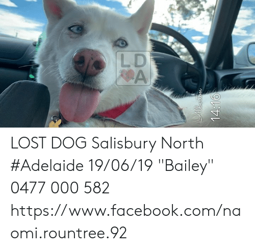 """Facebook, Memes, and Lost: LD  A  14:16 LOST DOG Salisbury North #Adelaide 19/06/19 """"Bailey"""" 0477 000 582 https://www.facebook.com/naomi.rountree.92"""