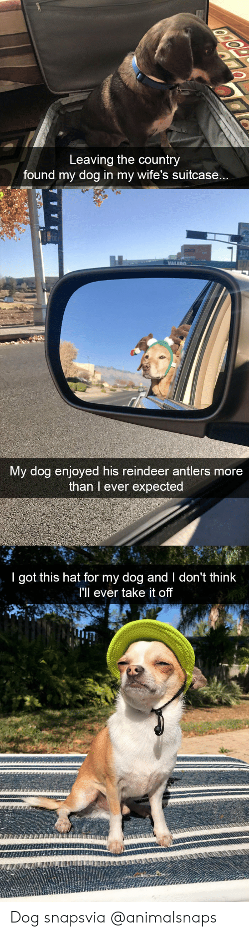 reindeer: Leaving the country  found my dog in my wife's suitcase...   My dog enjoyed his reindeer antlers more  than I ever expected   I got this hat for my dog and I don't think  I'll ever take it off  Tin Dog snapsvia @animalsnaps