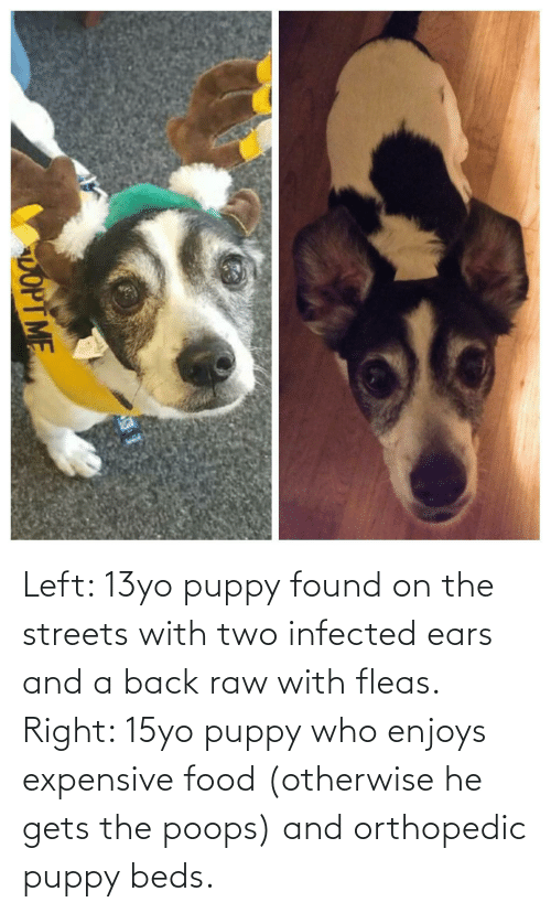 13Yo: Left: 13yo puppy found on the streets with two infected ears and a back raw with fleas. Right: 15yo puppy who enjoys expensive food (otherwise he gets the poops) and orthopedic puppy beds.