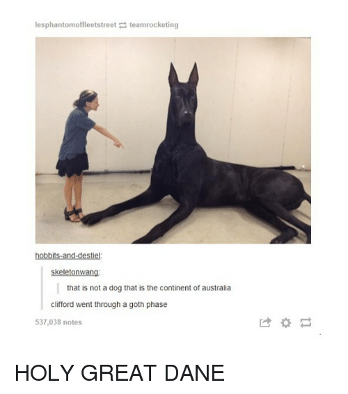 Tumblr, Australia, and Dog: lesphantomoffleetstreet teamrocketing  hobbits-and-destiel  skeletonwang  that is not a dog that is the continent of australia  clifford went through a goth phase  537,038 notes  は* HOLY GREAT DANE