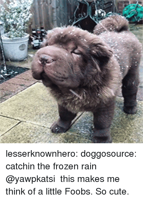 Cute, Frozen, and Tumblr: lesserknownhero: doggosource: catchin the frozen rain @yawpkatsi  this makes me think of a little Foobs. So cute.