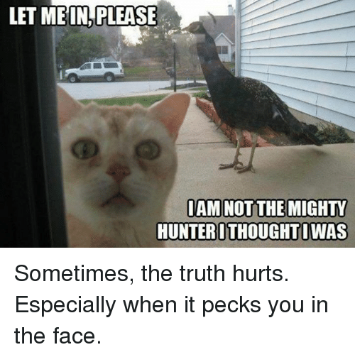 Pecks: LET MEIN,PLEASE  HUNTEROTHOUGHTIWAS Sometimes, the truth hurts. Especially when it pecks you in the face.