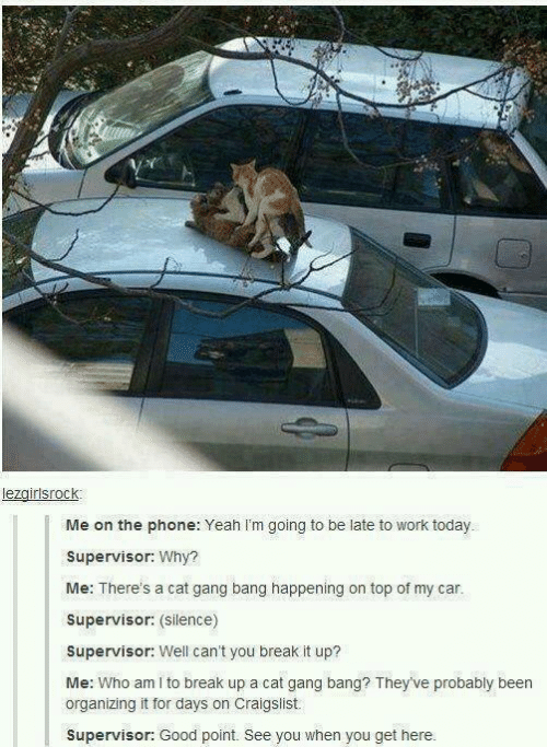 Going To Be Late: lezgirlsrock  Me on the phone: Yeah I'm going to be late to work today.  Supervisor: Why?  Me: There's a cat gang bang happening on top of my car.  Supervisor: (Silence)  Supervisor: Well can't you break it up?  Me: Who am I to break up a cat gang bang? They've probably been  organizing it for days on Craigslist.  Supervisor: Good point. See you when you get here.