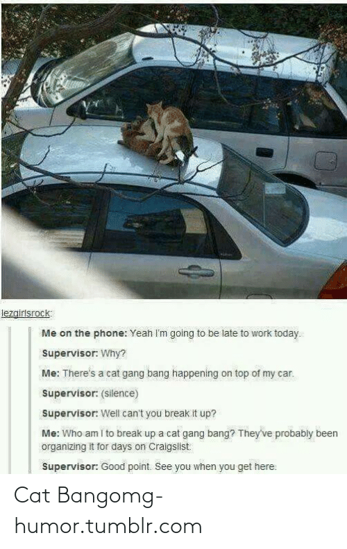Be Late: lezgirlsrock:  Me on the phone: Yeah I'm going to be late to work today.  Supervisor: Why?  Me: There's a cat gang bang happening on top of my car.  Supervisor: (silence)  Supervisor: Well can't you break it up?  Me: Who am i to break up a cat gang bang? They've probably been  organizing it for days on Craigslist  Supervisor: Good point. See you when you get here: Cat Bangomg-humor.tumblr.com