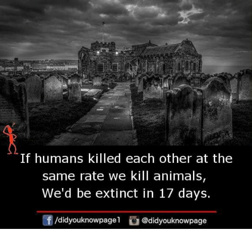 Animals, Memes, and 🤖: lf humans killed each other at the  same rate we kill animals,  We'd be extinct in 17 days.  /didyouknowpagel @didyouknowpage